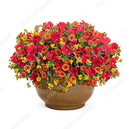 Shopmeeko Große Förderung !!!200 + mischfarbe mehrjährige petunien pflanzen in bonsai indoor blume pflanzen für hausgarten bonsai pflanze decoratio: lila