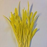 50 - graines: graines de maïs soufflà bio à germer ou à faire pousser !! - mmmmm wow !!...Bien!!!