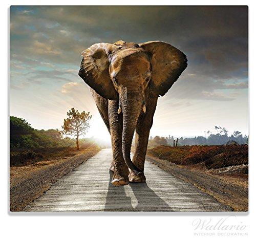 Wallario Herdabdeckplatte / Spitzschutz aus Glas, 1-teilig, 60x52cm, für Ceran- und Induktionsherde, Elefant bei Sonnenaufgang in Afrika