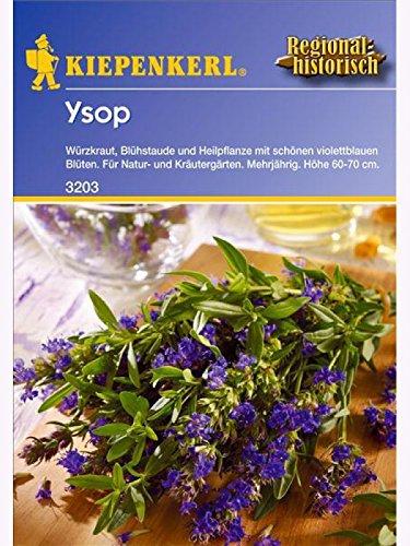 Ysop Hyssopus officinalis