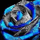 Yukio Bauergarten - 50 Stücke Edelrosen Samen Beet-Rose Blumenmeer, Parfum-Rose Attraktion für Beet, Garten, Balkon, Topf, Bonsai