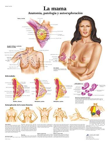 3B Scientific Papier bedruckt, Stillen, Anatomie, Pathologie und Autoe X ploración, 1