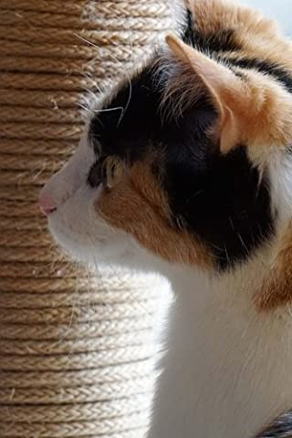 Pretty Tri-Color Domestic Shorthair Cat in Profile Pet Journal: 150 Page Lined Notebook/Diary