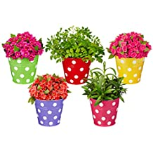 Solimo Corrosion Resistant Hanging Planter - Set of 5 (Round - Red, Green, Yellow, Pink, Purple)