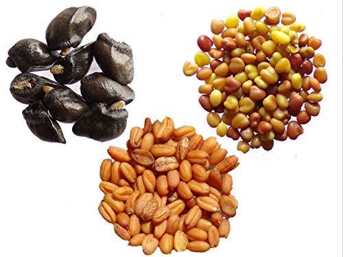 Vos Favoris 2015 - 3 sachets: 1 sachet de Grande Consoude 30 graines + 1 sachet de Micro-Trèfle 3 grammes + 1 sachet de Cameline 1 Gramme