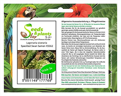 Stk - 5x Lagenaria siceraria Speckled Swan Kürbis - Samen Zierkürbis KS562 - Seeds Plants Shop Samenbank Pfullingen Patrik Ipsa