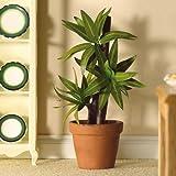 Dolls House 5627 Pflanze Yucca Palme 1:12 für Puppenhaus