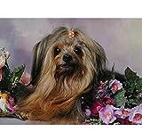 Pintura De Diamante Yorkshire Terrier, Accesorios De Pintura De...