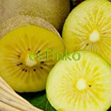 100pcs / bag Giallo Kiwi Berry Semi Actinidia deliciosa Kiwi Seeds Delicious Fruit Bonsai Seeds giardino domestico di DIY
