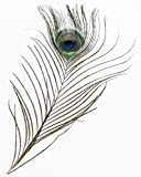 NaDeco Pfauenfeder Natur 1 Stück ca. 25-30cm | Pfauen Feder | Pfauenauge | Schmuckfeder | Hutfeder | Dekofeder | Feder vom Pfau