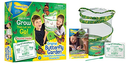 Insect Lore de Buki - Jeux Educatifs - Kit Insectes Vivants Chenilles - Version UK 0735569010107