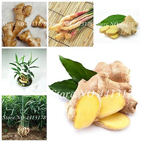 plentree pacchetto semi: 100 pc/sacchetto esotico zenzero esterna bonsai balcone succosa verdura in vaso seedsfor garden flower pot er facile da coltivare