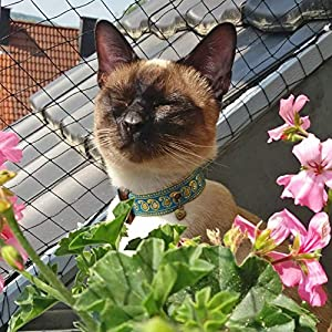 GentleCat – Sicherheitshalsband für Katzen auf Maß