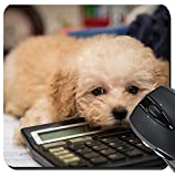 MSD Suqare Mousepad 20,3x 20,3cm Maus Pads/Matte Design: 35006234Pudelwelpe, dass auf Büro Schreibtisch