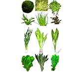 10 Bunde ca. 60 Pflanzen + Javamoos, Mooskugeln, Dünger, Aufbereiter ...