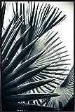 """JUNIQE® Bild mit Rahmen 40x60cm Blätter & Pflanzen Palmen - Design """"Palm Shade 2"""" (Format: Hoch) - Wandbilder, Gerahmte Bilder & Gerahmte Poster von unabhängigen Künstlern - Botanische Kunst mit Pflanzen - entworfen von Chris Abatzis"""