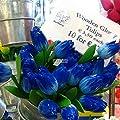 Soteer Garten-10/20 stück Tulpenzwiebeln Samen Bunte Blumensamen Blumenzwiebel Bonsai Tulpen Winterhart Mehrjährig von Soteer - Du und dein Garten