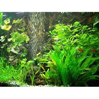 aquatic plants set, moss, fertilizer, food aquatic plants set, moss, fertilizer, food 511iVTRXU8L