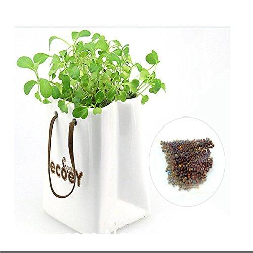 200pcs-trefle-a-quatre-feuilles-herbe-graines-decoration-formez-vos-propres-interets-chance-campagne
