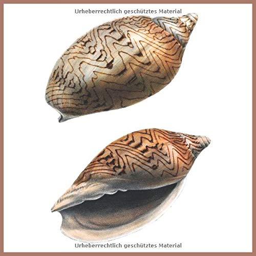 Notizbuch Spirale Muscheln: Blanko notebook, 150 Seiten, Soft cover, (21,5 cm x 21,5 cm)