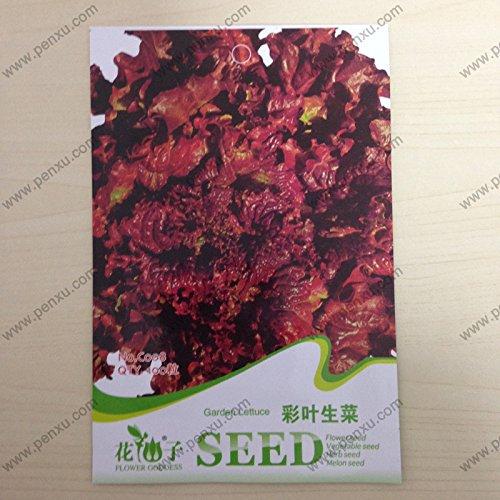 Semences végétales originaux Paquet de graines de laitue, Coleo du jardin, floración Madura 50 jours, 100 particules semences/sac