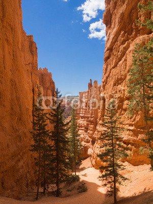 "Poster-Bild 40 x 50 cm: ""Bryce Canyon Nationalpark"", Bild auf Poster"