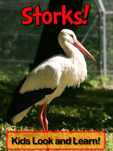 Storks! Learn About Storks and Enjoy Colorful Pictures - Look and Learn! (50+ Photos of Storks) (English Edition)