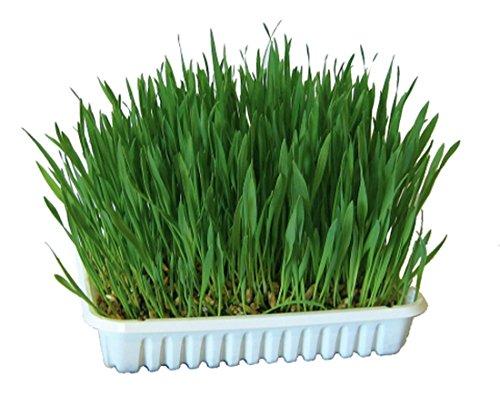 100g) Gras für Nager Kaninchen Hasen Meerschweinchen Hamster Futterergänzung Futtergras Nahrungsergänzung auch für Katzen als Katzengras geeignet ()