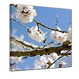 Bilderdepot24 Kunstdruck - Frühling - Bild auf Leinwand - 60 x 60 cm - Leinwandbilder - Bilder als Leinwanddruck - Wandbild Pflanzen & Blumen - Jahreszeiten - Apfelblüten