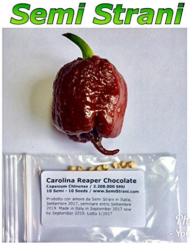 10 Graines Pures De Carolina Reaper Chocolate, Le Piment Chili Le Plus Piquant Du Monde\