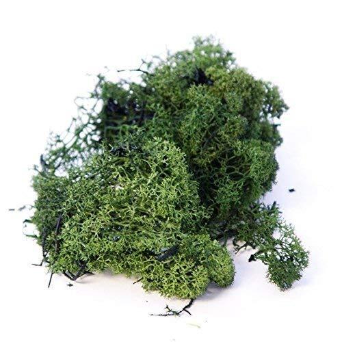 Inerra Finlande Mousse - Vert Foncé - Rennes Mousse Loisirs Créatifs Plantes Pots Fleurs Écran D'Affichage Modelage - Vert Foncé, 1 Kilogram