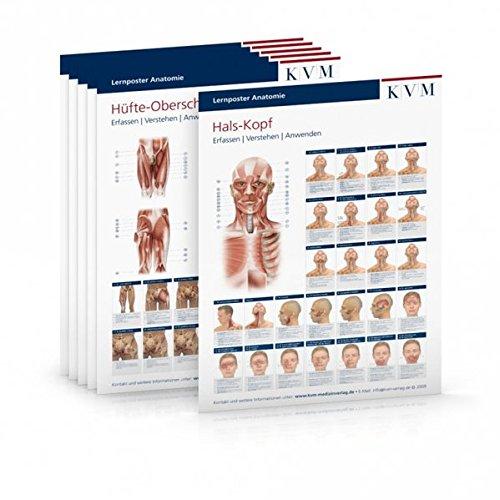 Lernposter Anatomie - Muskulatur