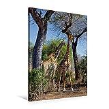 Premium Textil-Leinwand 60 cm x 90 cm hoch, Giraffen im Krüger NP | Wandbild, Bild auf Keilrahmen, Fertigbild auf echter Leinwand, Leinwanddruck (CALVENDO Natur)