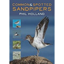 Common and Spotted Sandpipers