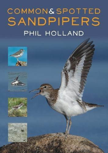 Common and Spotted Sandpipers por Phil Holland