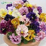 100seeds / pack belle semi viola del pensiero della miscela di colore ondulate Viola Tricolor Sementi di fiori in vaso bonsai fai da te casa e giardino