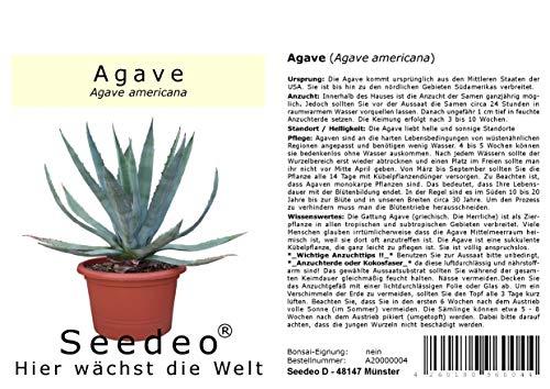 Seedeo® Agave (Agave americana) 10 Samen