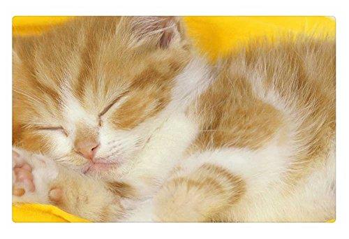 IRocket Indoor Tappeto/Pavimento-Sleeping Kitten (59,9x 39,9cm 60cm x 40cm)