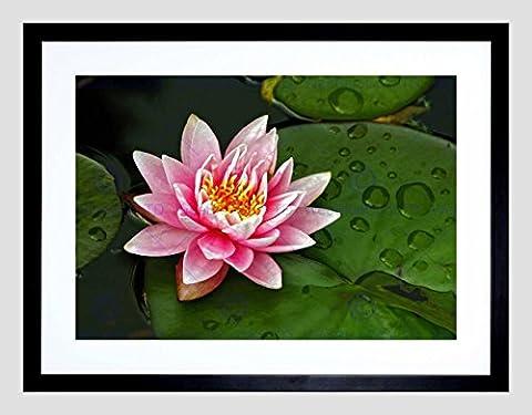 LOTUS FLOWER LILY PAD PINK BLACK FRAME FRAMED ART PRINT