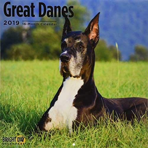 Great Danes 2019 (BREEDS)