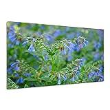 Beinwell Blume Blau Pflanze Blatt Grün Natur Leinwand Poster Druck Bild aa3514 160x120