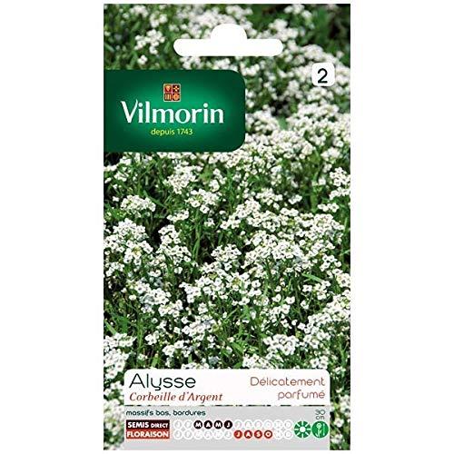Vilmorin - Sachet graines Alysse Corbeille d'argent