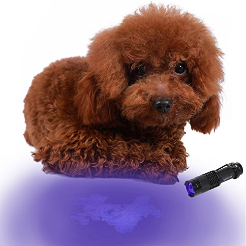 cinoton 365nm 5W LED UV linterna Pet orina y mancha Detector Blacklight/con enfoque ajustable, encontrar manchas secas en alfombras/alfombras/suelo Detección de falsificadas, verificación de documentos, cosméticos cuidado de la piel productos pruebas