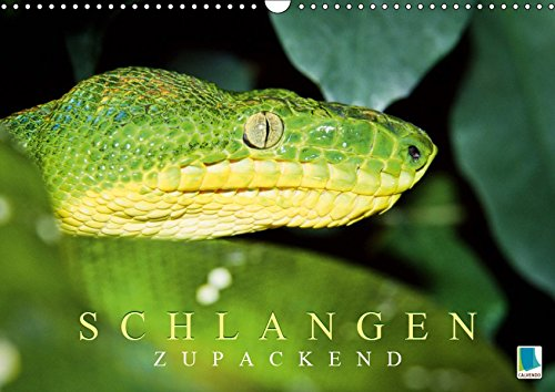 Schlangen: Zupackend (Wandkalender 2019 DIN A3 quer): Schlangen: Wundersame Reptilien (Monatskalender, 14 Seiten ) (CALVENDO Tiere)