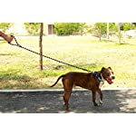 Comfortable & Shock Absorbing 4ft Climbing Rope Dog Leash with Comfy Foam Handle for Walking Running Hiking & Training… 14