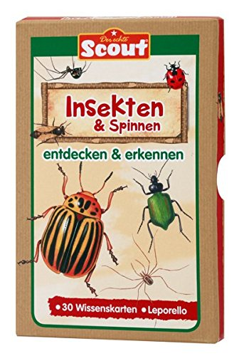Preisvergleich Produktbild Scout Lernkarten-Box - Insekten & Spinnen: entdecken & erkennen