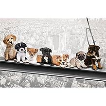 empireposter 744012Perros sobre soporte de acero–New York skydogs–Diversión Ciudades Cachorros Interactive–Póster, 91,5x 61cm, papel, multicolor, 91,5x 61x 0.14cm