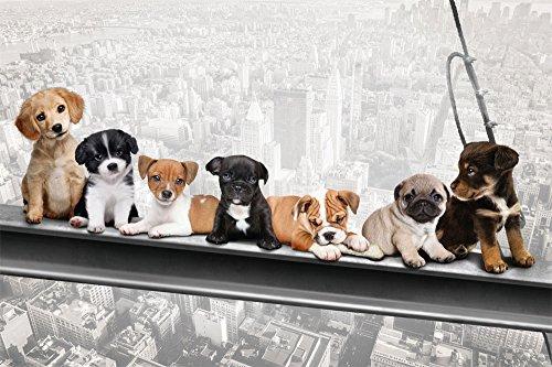 Hunde auf StahlträgerNew York SkydogsGröße (cm), ca. 91,5x61Poster, NEU