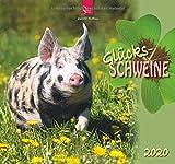 Glücksschweine: Original Stürtz-Kalender 2020 - Mittelformat-Kalender 33 x 31 cm
