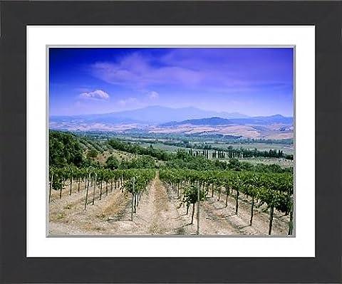 Framed Print of Villa Banfi vineyards, Montalcino, Tuscany, Italy